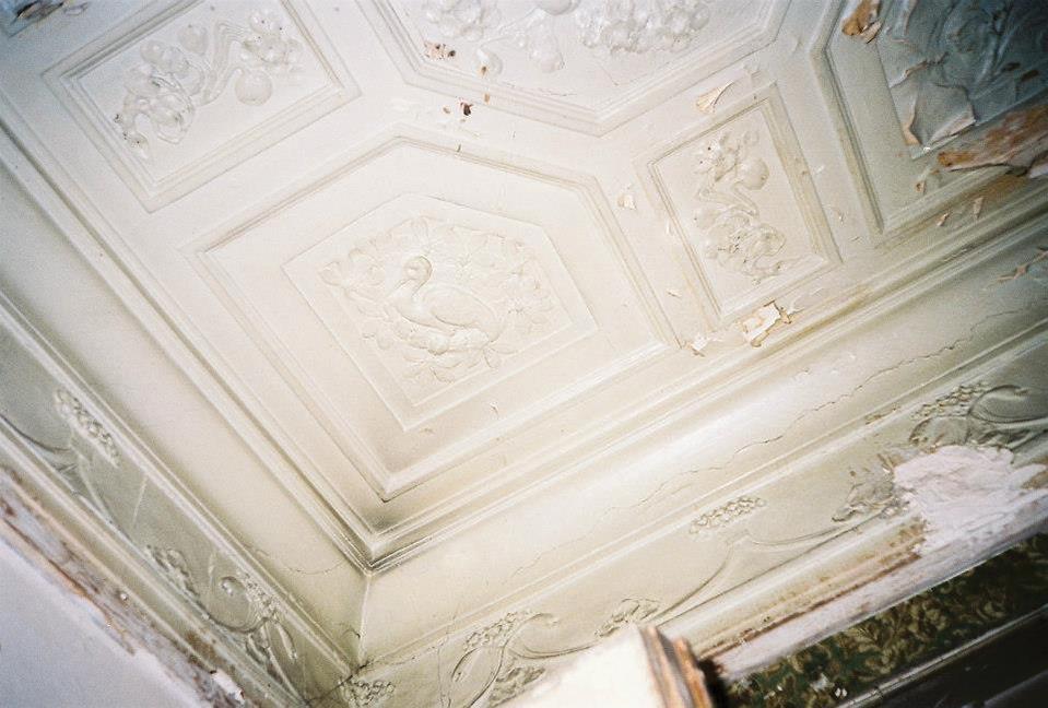 Лепной декор потолка кабинета, стилизованный под дерево. Изображение сидящей цапли